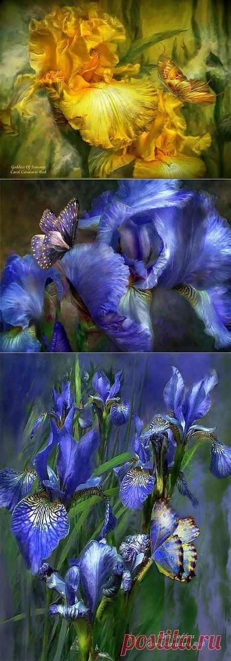 Волшебство цветов в картинах Керол Каваларис.