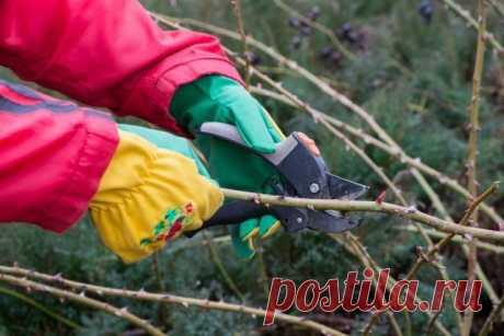 Готовим розы к зиме – 13 полезных советов для начинающих цветоводов | Розы (Огород.ru)