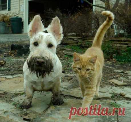 Котейки и пёсики
