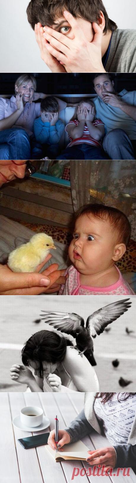 Орнитофобия: причины и симптомы патологии, способы лечения боязни птиц