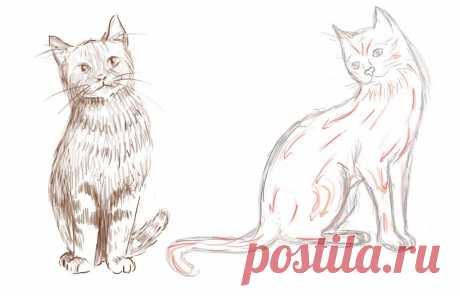 «Как нарисовать кошку поэтапно карандашом» — карточка пользователя slavashishaev в Яндекс.Коллекциях
