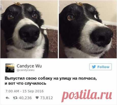 Как можно не любить собак? / Занимательная реклама