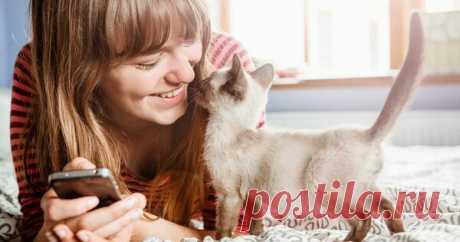 7 вещей, которые кошки терпеть не могут | Ваши Питомцы | Яндекс Дзен