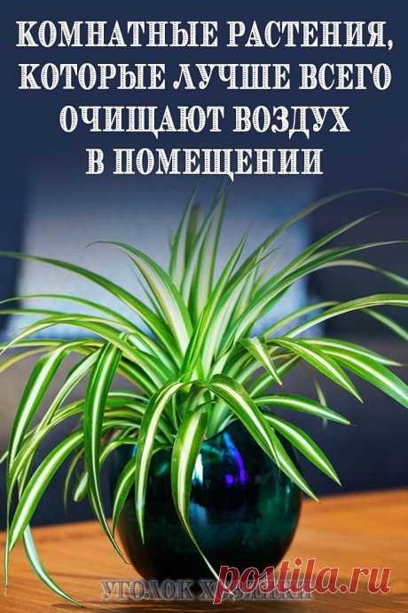 Ученые советуют: в помещении, где люди проводят много времени, надо иметь не менее трех комнатных растений.