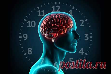 """Как работают биологические часы... - Познавательный сайт ,,1000 мелочей"""" - медиаплатформа МирТесен"""