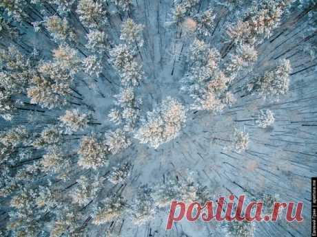 Зимний сибирский лес. Автор фото — Greenjew: nat-geo.ru/photo/user/18950/
