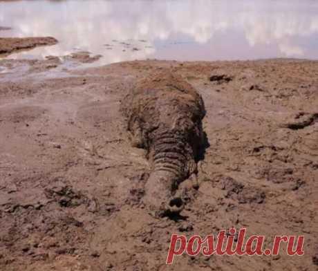 Слон попал в грязевую ловушку — люди не прошли мимо . Тут забавно !!!