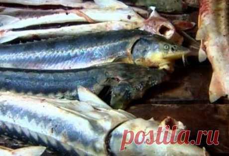 Рыбинспектор попался с рыбой — новости на сайте Ак Жайык