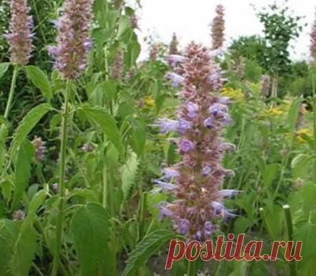 Растения для вашего цветника, которые не требуют полива