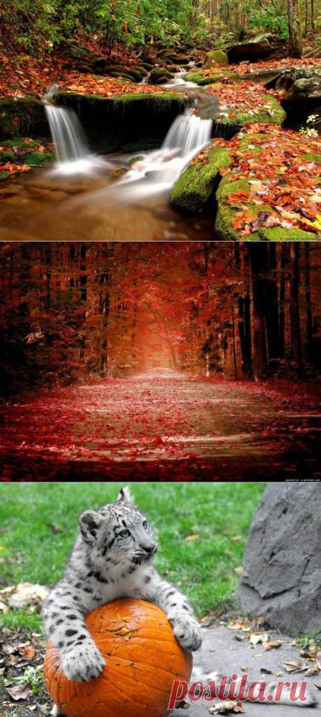 Осенние сюжеты - Фото - Калейдоскоп Эмоций