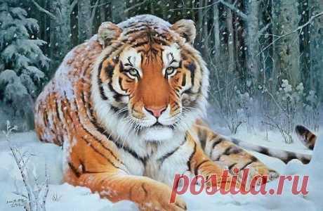 Схема вышивки «Тигр» - Вышивка крестом