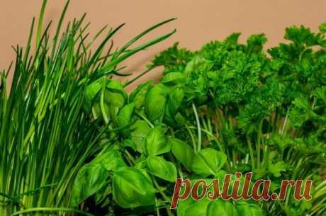 Для салатов и супов. Как правильно заморозить зелень, сохранив витамины Пряные травы могут храниться в замороженном виде в течение года.