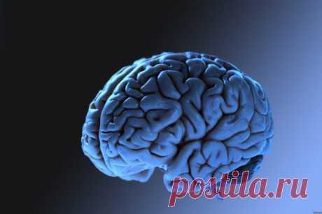 Ещё 15 поразительных фактов о мозге и мышлении / Научный хит