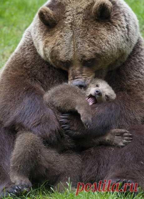 «Медвежьи нежности» — карточка пользователя tcuzminova в Яндекс.Коллекциях