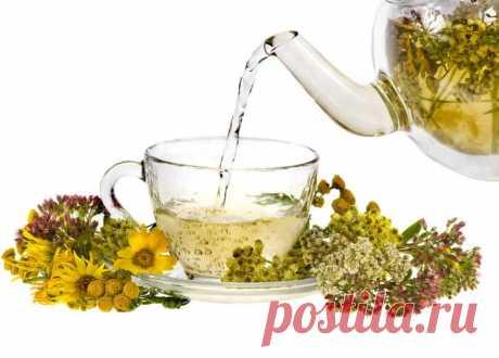 Монастырский чай: свойства, состав, показания к применению Монастырский чай используют не только как профилактическое средство, но и в качестве вспомогательного напитка во время проведения лечебной терапии.