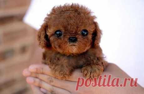 Piccsy :: so cute and tiny