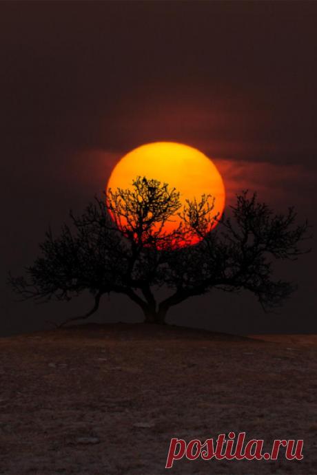 don't call me betty | (via Tree of Wisdom – Amazing Pictures - Amazing...