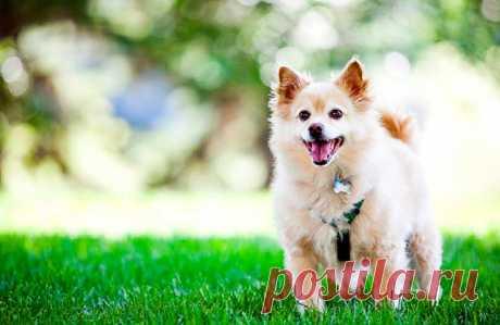 Кардиология собак и кошек - Ветеринарный Кардиологический Центр
