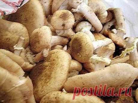 Экономный способ заготовки грибов на зиму