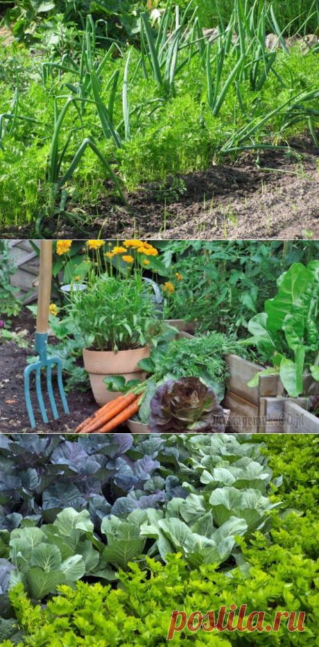 Las plantaciones mezcladas: escogemos a los mejores vecinos para las plantas