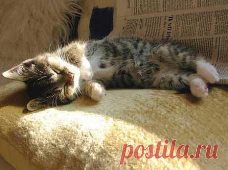 Сладко спит... :) » Зверушки.ру
