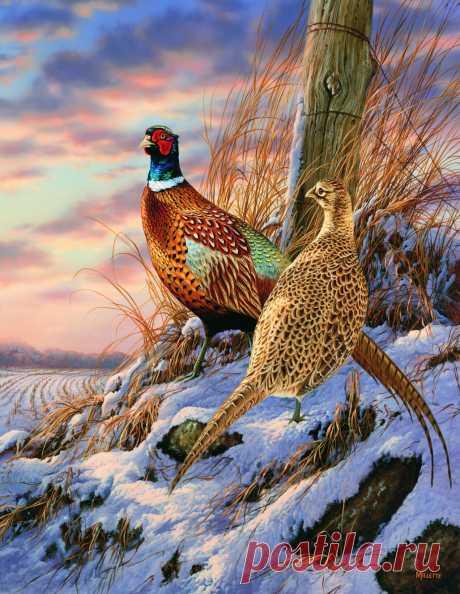 Пернатый народ...осень-зима   Rosemary Millette (часть 2.)