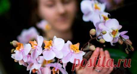 Орхидеи для новичков: простые советы по выращиванию Рассказываем, как ухаживать за орхидеями и разбираем распространенные ошибки. Многие люди думают, что орхидеи прихотливы и требуют сложного ухода. На самом деле это не так, просто уход за ними немного отличается от привычного. Разбираемся, как пересаживать, подкармливать и поливать эти прекрасные цветы. С чего начать? Итак, вам подарили или вы сами купили орхидею в цветочном центре. Для начала вам нужно дать ей привыкнуть...