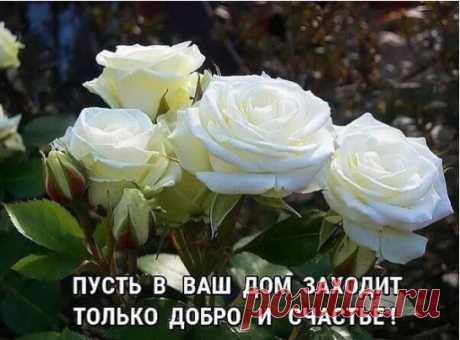 A MIS AMIGOS - 333 fotos. Las fotografías Nina Gorbachov.