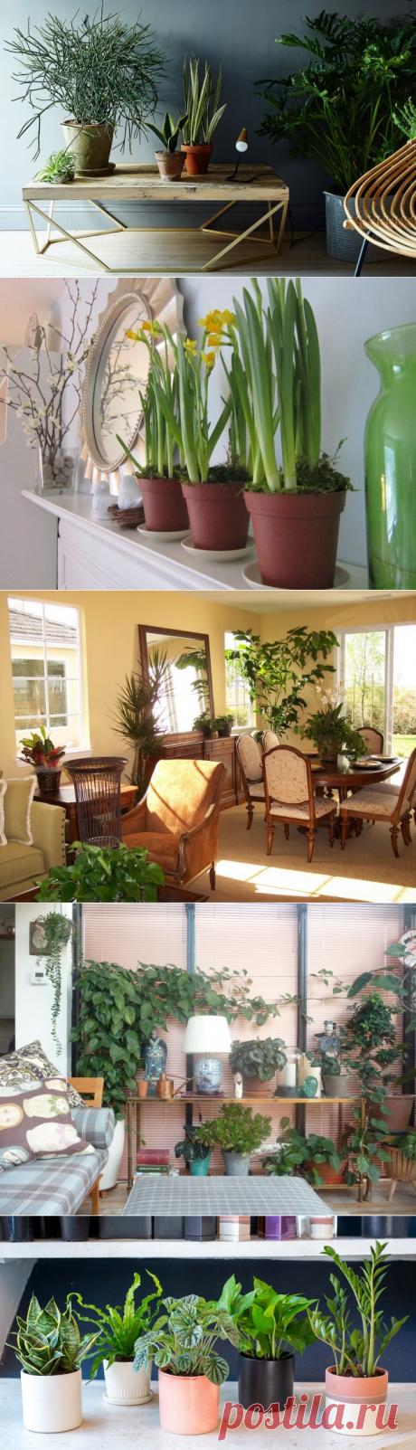 Зачем домашним растениям нужна перекись водорода — Полезные советы