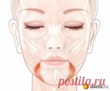 Поднимаем уголки губ: упражнение «Улыбка» За опущенные уголки губ, которые придают лицу унылое выражение, отвечает мышца, опускающая угол рта. Иначе еще её называют «мышца презрения». Эта треугольная по форме мышца, начинаясь от боковой повер…
