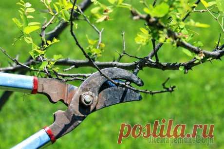 Все способы защиты от вредителей в саду