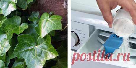 Моя сестра поместила горсть листьев этого растения в стиральную машину… результат просто шокирующий! — Полезные советы