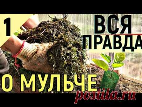 ACTIVE MULCH HOW TO INCREASE FERTILITY