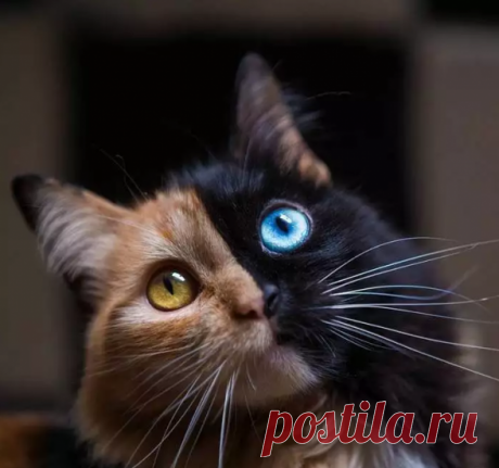 Этот необычный котенок — уникальный случай в природе. Взгляните на его окрас! — Калейдоскоп чудес