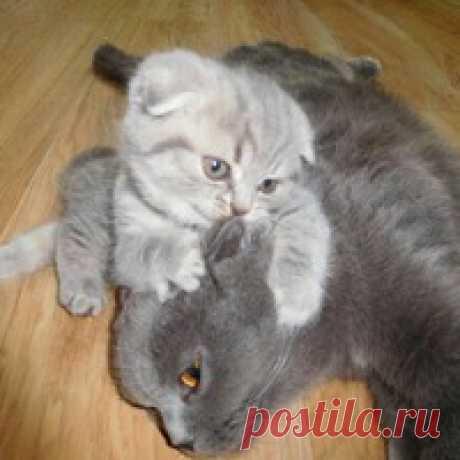 Ilma Cat