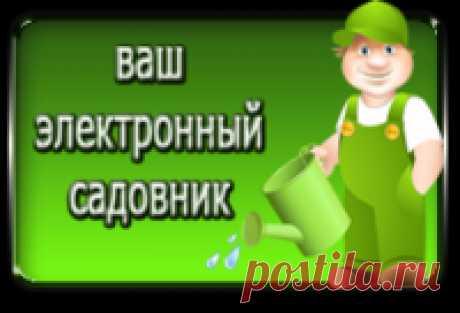 Как приготовить стимулятор роста растений + еще 5 секретов для дачи!