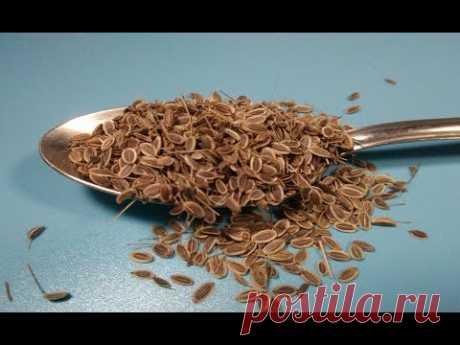 ★ Семена укропа очистят сосуды, избавят от цистита. Укропа для поджелудочной железы