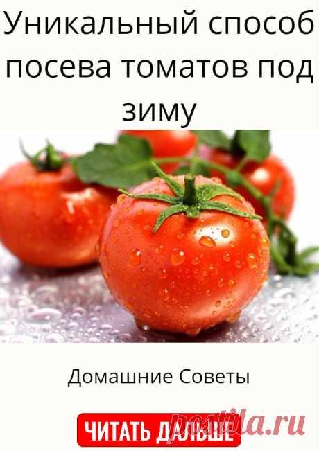 Уникальный способ посева томатов под зиму