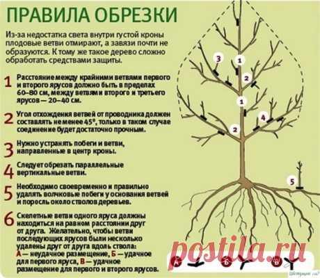Правила зимней обрезки плодовых деревьев — Садоводка