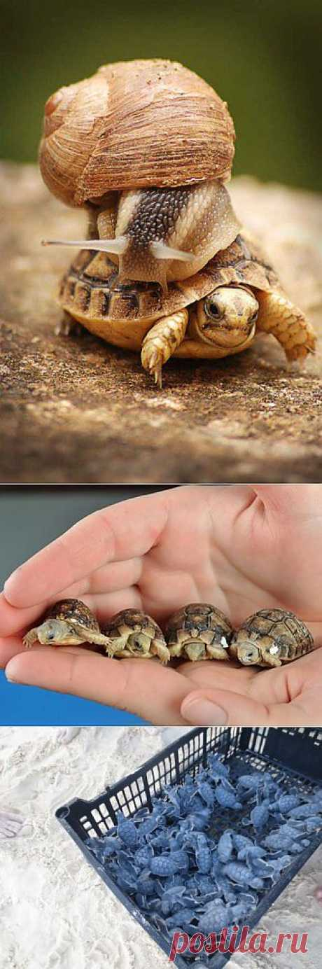 (+1) тема - В мире животных. Черепахи | НАУКА И ЖИЗНЬ