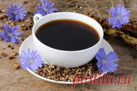 Корень цикория — отличный заменитель кофе, который лечит диабет, запор и остеоартрит Лечим диабет, запор и остеоартрит при помощи корня цикория — подробнее об этих и других полезных свойствах продукта читайте ниже. Любите выпить чашечку кофе по утрам, но переживаете за количество кофе...