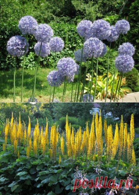 5 высокорослых цветов, которые станут основой вашей клумбы