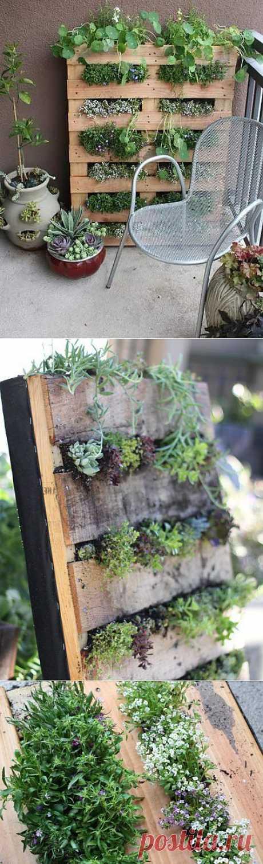 Вертикальный сад своими руками
