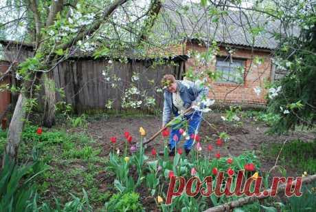 Особенности посадки тюльпанов весной