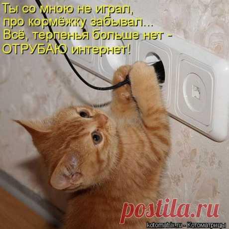 обиженный котенок