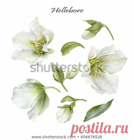 - Shutterstock