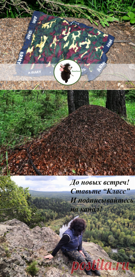 Не ходите в походы из-за комаров? Решить проблему помогут муравьи (инструкция) | ЁжикTravel | Яндекс Дзен