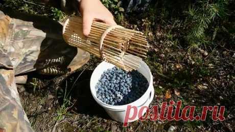 Стакан-комбайн для сбора ягод своими руками