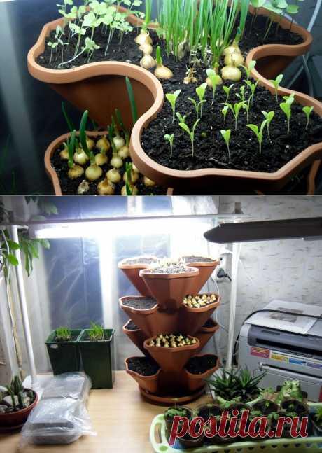 10 secrets of a house kitchen garden   the Kitchen garden without efforts