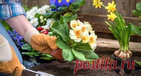 Каталог многолетних цветов для дачи: фото с названиями и описанием растений  Дачный участок может стать не только основой для выращивания фруктовых деревьев и овощей – для обустройства территории нередко используются цветущие и вечнозеленые растения, которые оформляются в красивые клумбы и цветники. Дачники и садоводы могут использовать каталог многолетних цветов для дачи:...